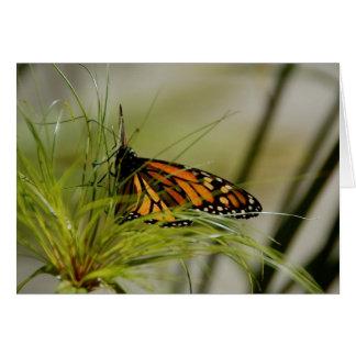 Monarch Butterfly Blank Card