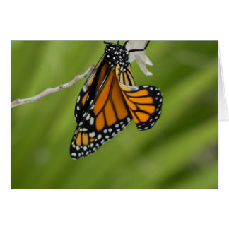 Monarch Butterfly Blank Greeting Card