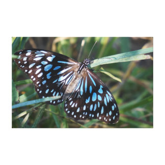 MONARCH BUTTERFLY BLUE IN RURAL AUSTRALIA GALLERY WRAPPED CANVAS