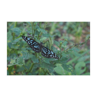 MONARCH BUTTERFLY BLUE RURAL QUEENSLAND AUSTRALIA GALLERY WRAPPED CANVAS
