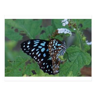 MONARCH BUTTERFLY BLUE RURAL QUEENSLAND AUSTRALIA POSTCARD