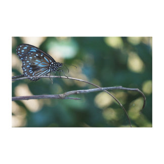 MONARCH BUTTERFLY BLUE RURAL QUEENSLAND AUSTRALIA STRETCHED CANVAS PRINT