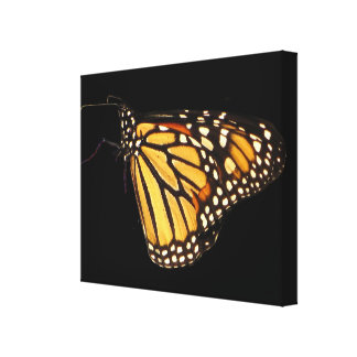 Monarch Butterfly Canvas Prints
