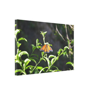 Monarch Butterfly Stretched Canvas Print