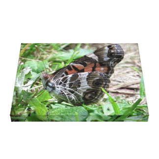 Monarch Butterfly Gallery Wrap Canvas