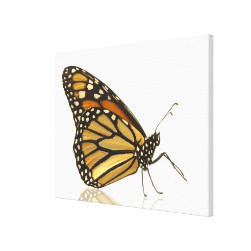 Monarch butterfly stretched canvas prints