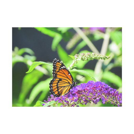 Monarch Butterfly Canvas Photograph Canvas Print