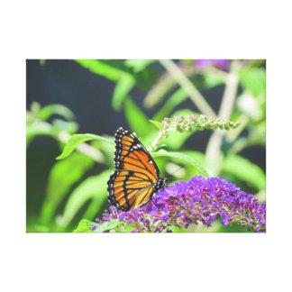 Monarch Butterfly Canvas Photograph Gallery Wrap Canvas