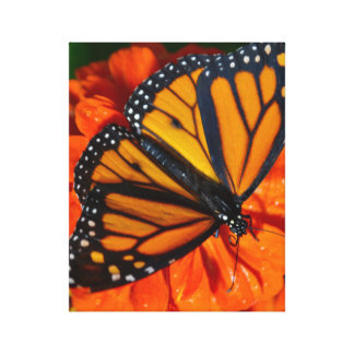 Monarch Butterfly Canvas Wrap Gallery Wrapped Canvas