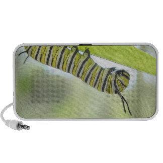 Monarch Butterfly Caterpillar Exploring A Milkweed iPod Speaker