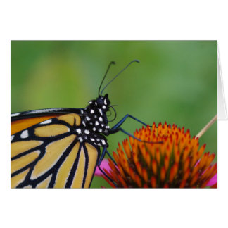 Monarch Butterfly Close-Up Greeting Card