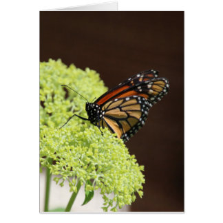 Monarch butterfly come see me card