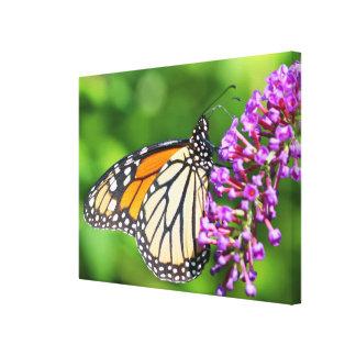 Monarch Butterfly - Danaus plexippus - Female Stretched Canvas Prints