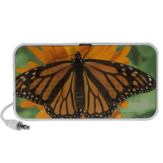 Monarch butterfly (Danaus plexippus) on pot iPhone Speakers