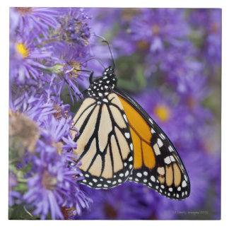Monarch butterfly feeding on aster flowers. ceramic tile