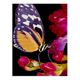 Monarch butterfly  flowers postcards