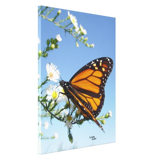 Monarch Butterfly Gloss Stretched Canvas Print