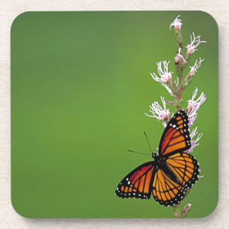 Monarch Butterfly Gradient Coasters