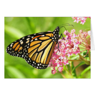 Monarch Butterfly Greeting Card, envelopes incl. Greeting Card