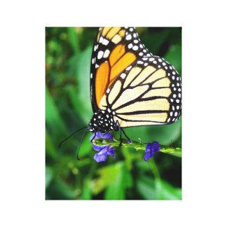 Monarch Butterfly In A Garden Gallery Wrap Canvas