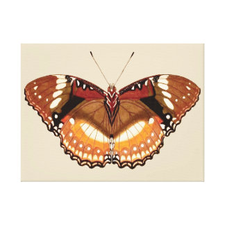 Monarch Butterfly in Brown, Rust and Cream Canvas Print