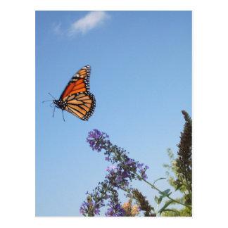 Monarch butterfly in flight post card