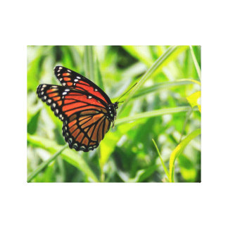 Monarch Butterfly in Flight Stretched Canvas Print
