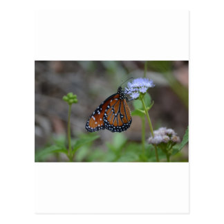 Monarch Butterfly in the butterfly series by LellO Post Cards