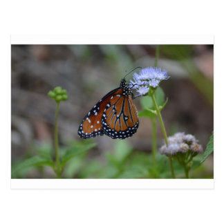 Monarch Butterfly in the butterfly series by LellO Post Card