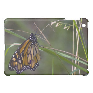 Monarch Butterfly in the Grass Case For The iPad Mini