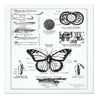 Monarch Butterfly Information 13 Cm X 13 Cm Square Invitation Card