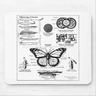 Monarch Butterfly Information Mouse Pads