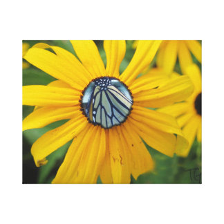Monarch butterfly inside a yellow daisy! canvas print