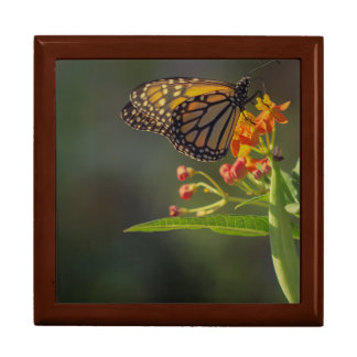 Monarch Butterfly Jewelry Box