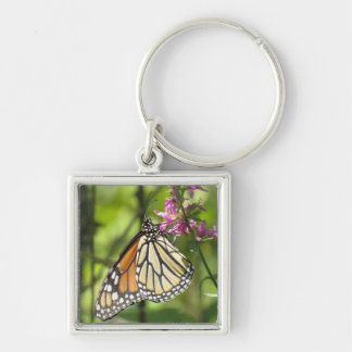 Monarch Butterfly keychain