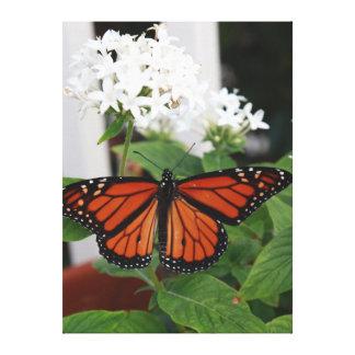 Monarch Butterfly Macro on Flowers Gallery Wrap Canvas