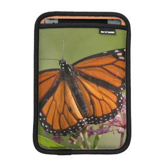 Monarch Butterfly male on Swamp Milkweed iPad Mini Sleeves