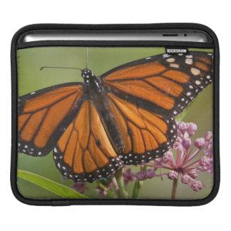 Monarch Butterfly male on Swamp Milkweed iPad Sleeves