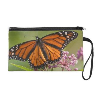 Monarch Butterfly male on Swamp Milkweed Wristlet Purse