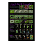 Monarch Butterfly Metamorphosis Education Poster
