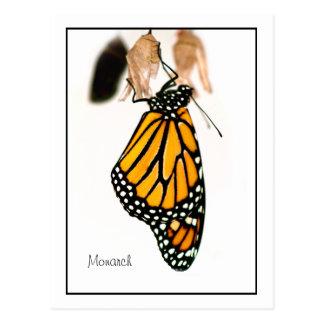 Monarch Butterfly Newborn Photograph Postcard