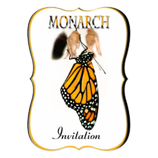 Monarch Butterfly Newborn with Cocoon - Photograph 13 Cm X 18 Cm Invitation Card