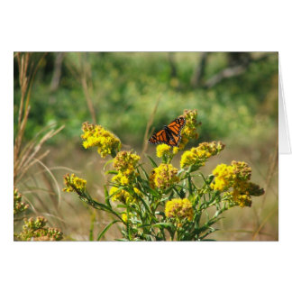 Monarch Butterfly Note Cards
