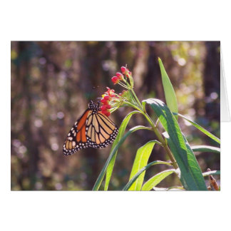 Monarch Butterfly Notecard Greeting Card