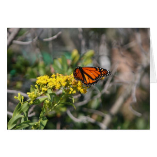 Monarch Butterfly Notecard Note Card