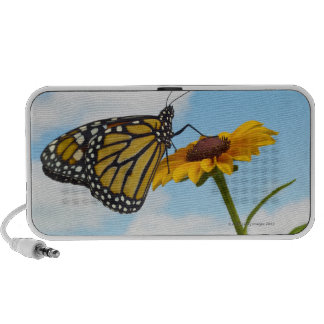 Monarch Butterfly on a Black Eyed Susan Travelling Speakers