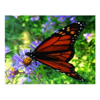 Monarch Butterfly on a Flower Postcard