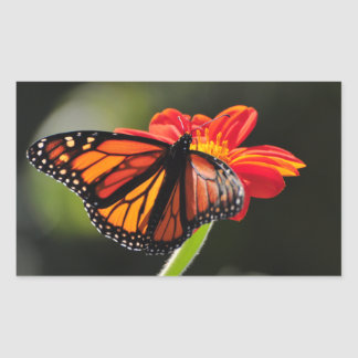 Monarch Butterfly on a Mexican Sunflower Torch Rectangular Sticker