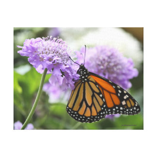 Monarch Butterfly on a Purple Flower Gallery Wrapped Canvas