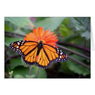 Monarch butterfly on an orange flower card